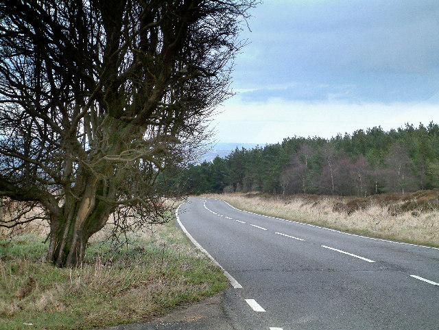 Ringinglow Road passing alongside Lady Canning's Plantation.