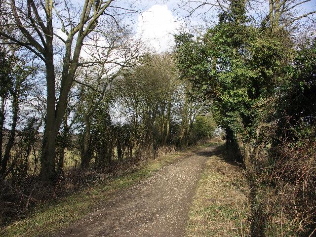 Ridgeway near Watlington