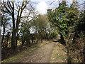 SU6993 : Ridgeway near Watlington by David Ellis