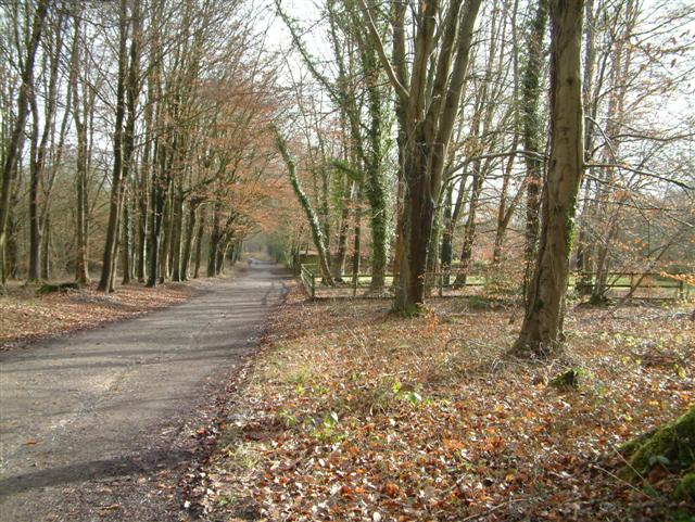 The Road to Leigh Hill House