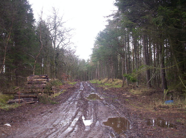 Logging Activity in Greenbottom Woods