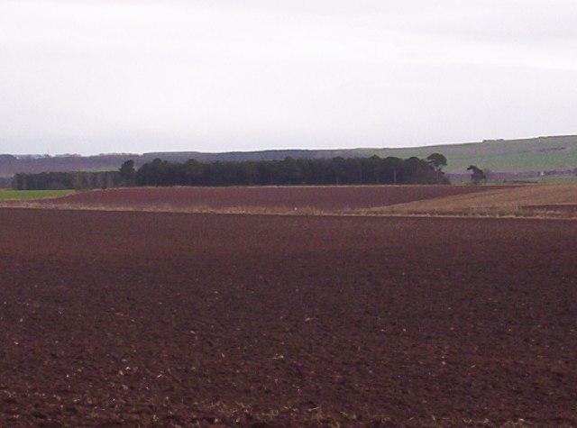 Fields and Woodland Near Cairnton