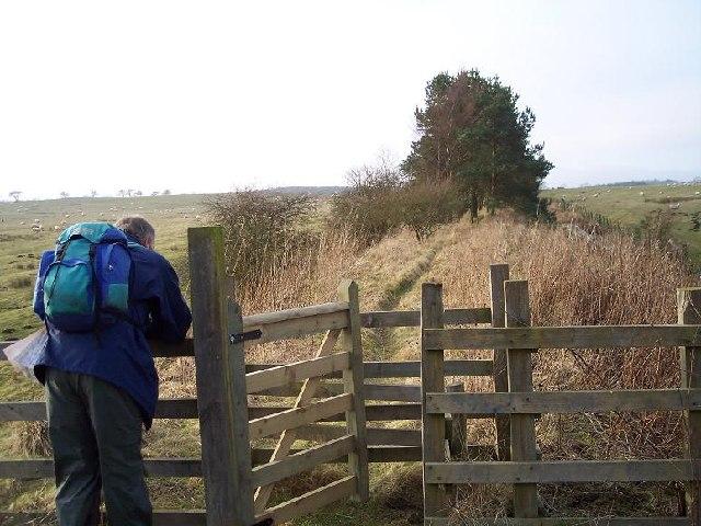 'Wannie Line' nr Rugley Walls, Scotsgap, Northumberland.