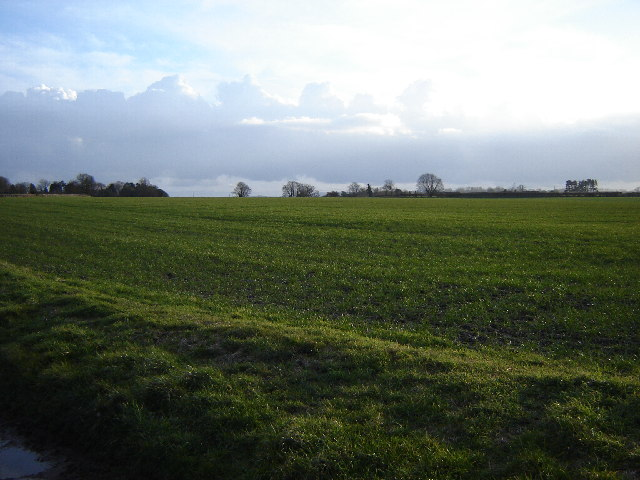 Fields near Binsted