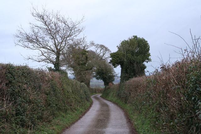 Shobrooke: lane near Furze Farm