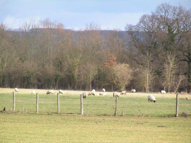 Sheep pasture & Wealden woodland