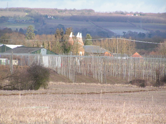 Hop poles in front of Crow Plain oast