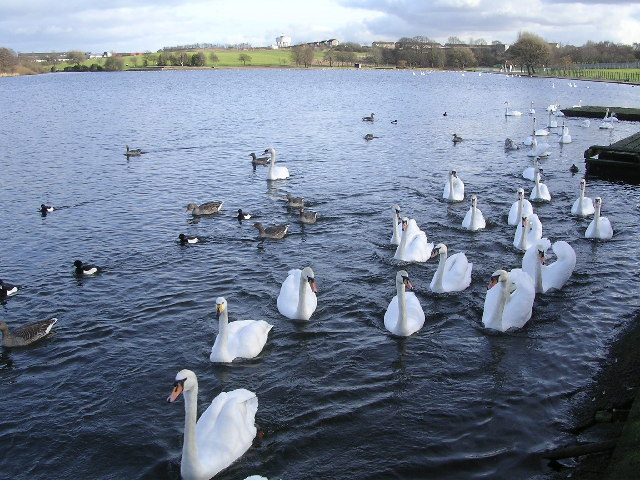 Swan Lake, aka Hogganfield Loch