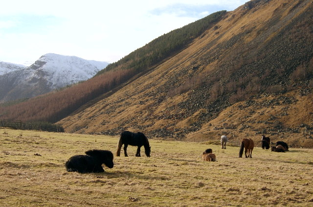 Horses Grazing Upper Glen Clova