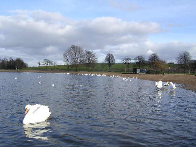 Swans on Hogganfield Loch
