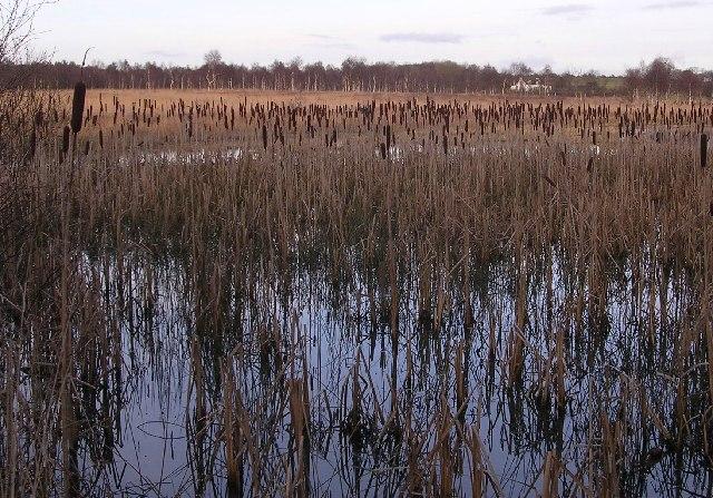 Bulrush Marsh