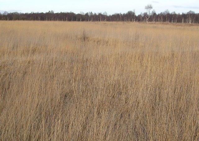 Heathfield Marshland