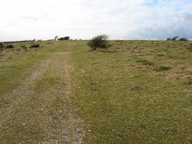 Windswept bushes near Beddingham Hill