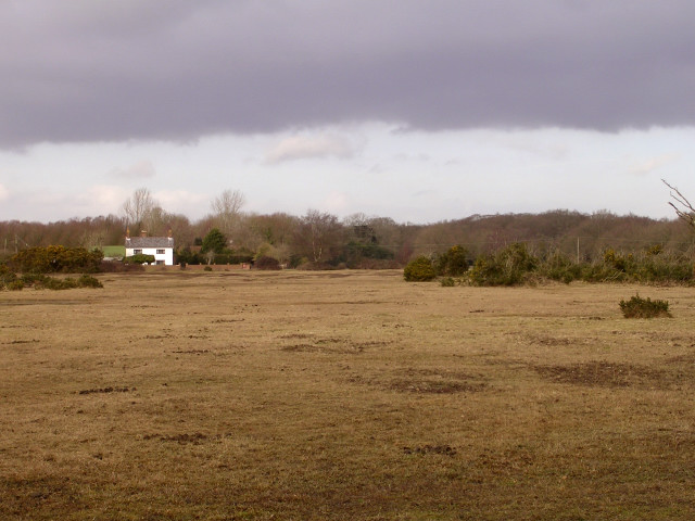 Lawn on Janesmoor Plain, New Forest