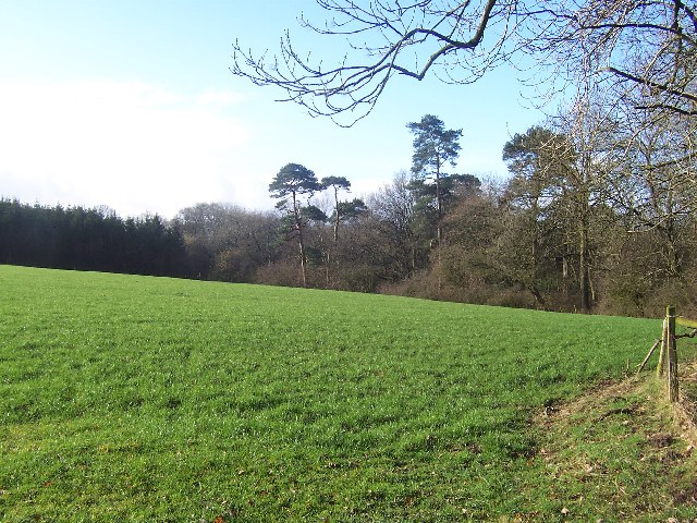 Field and Woods South of Ellenthorpe
