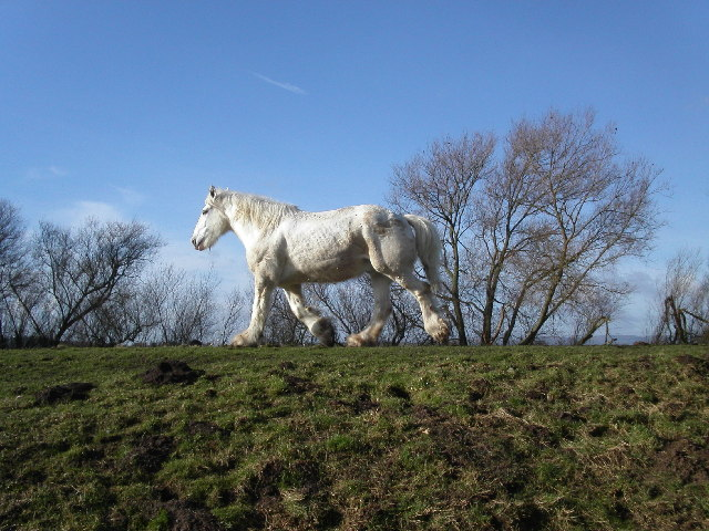 Horse on the Severn Way footpath