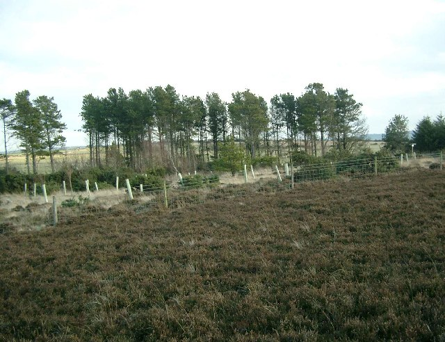 Newton Mulgrave Woods on Newton Mulgrave Moor