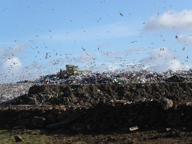 Seagulls on landfill site near Gloucester