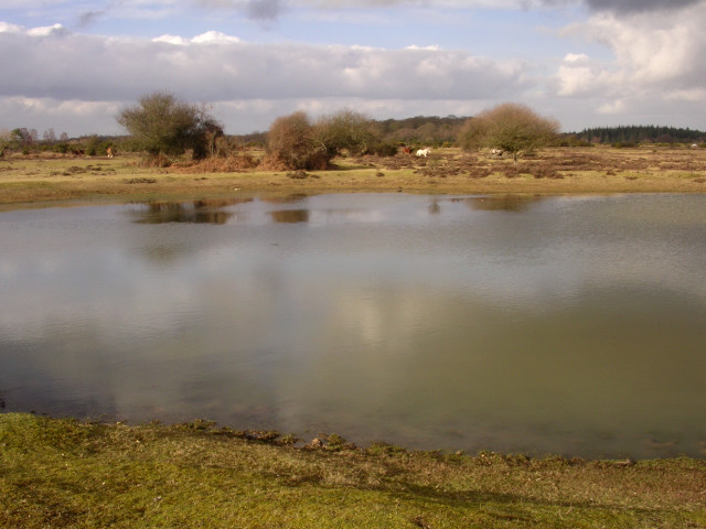 Ocknell Pond, New Forest