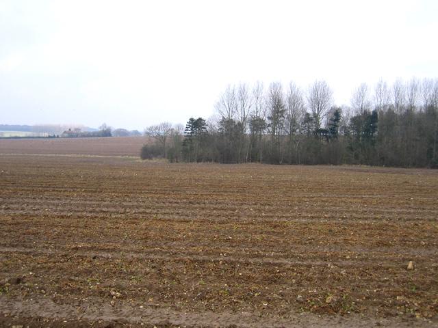 Osierbed Plantation, Dunton, Norfolk