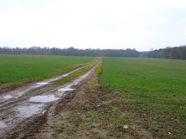 Farm track, Raynham, Norfolk