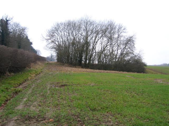 Wooded former marlpit, Raynham, Norfolk