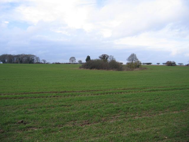 Wooded former marlpit in farmland, Helhoughton, Norfolk