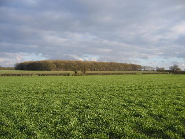 Gallond Plantation, Helhoughton, Norfolk