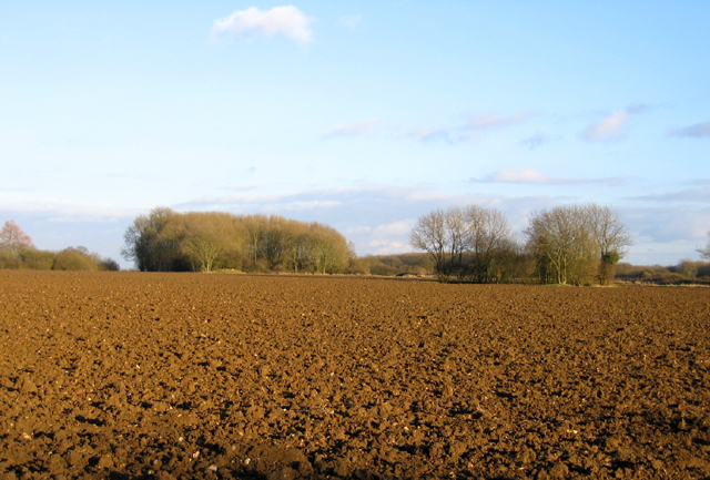 Farmland, west of West Raynham, Norfolk