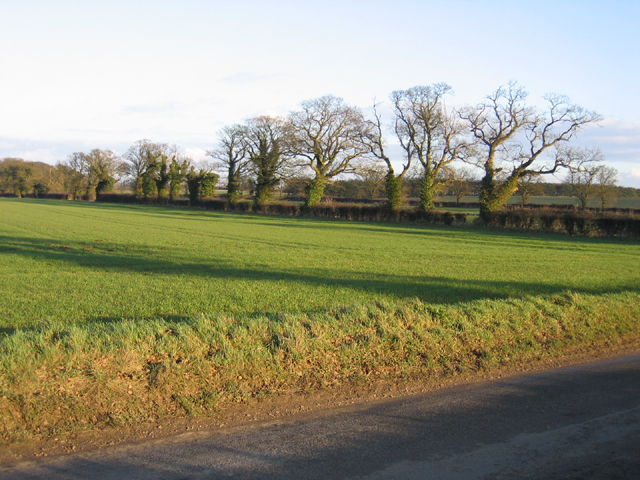 Farmland with trees, Weasenham St Peter, Norfolk