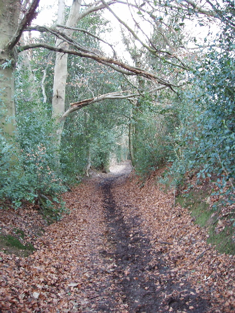 Old Shire Lane beside Newland Park, Chalfont St Giles