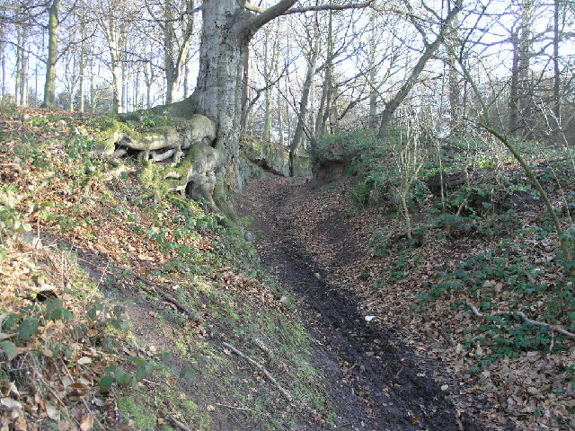 Bridleway through a cutting