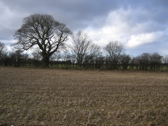 Farmland NW of Weasenham All Saints, Norfolk