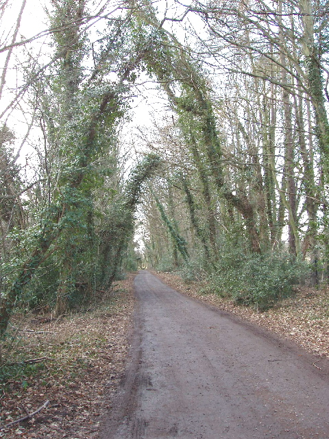 Track to Warren Farm, Chalfont St Giles