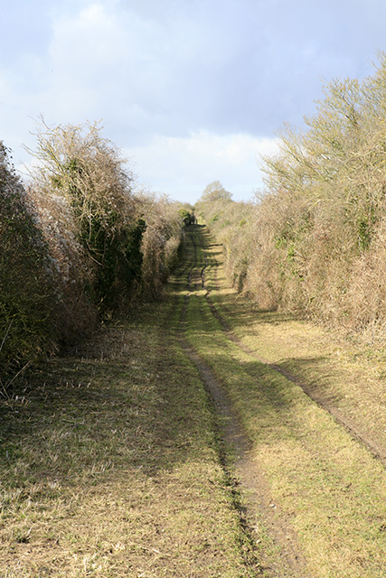 Byway on Steven's Drove, Houghton