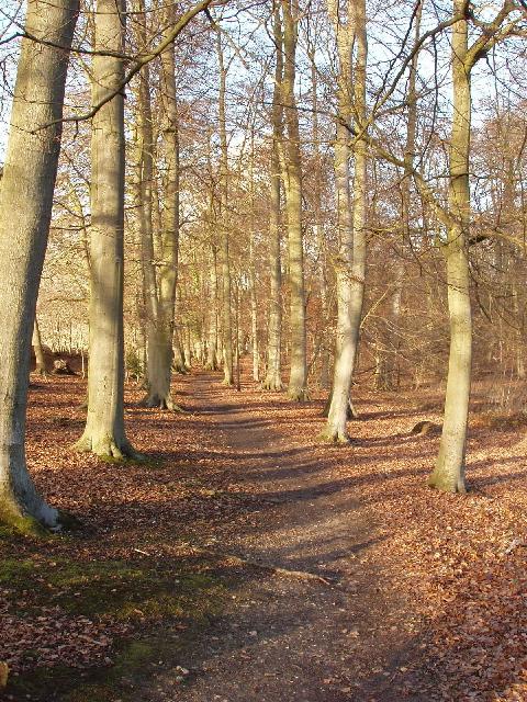 Carpenter's Wood, Chorleywood