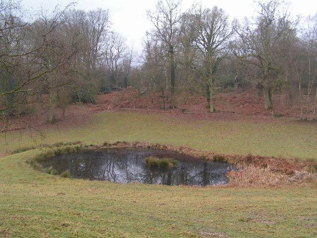 Pond & Woodland