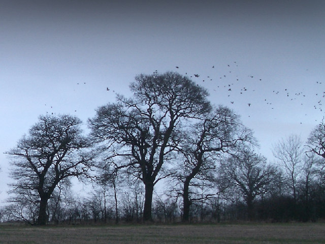Trees on Down Hill with birds leaving.