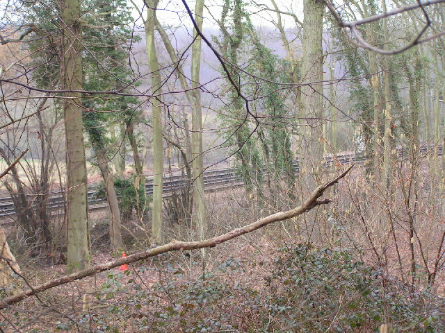 Railway line through the woods