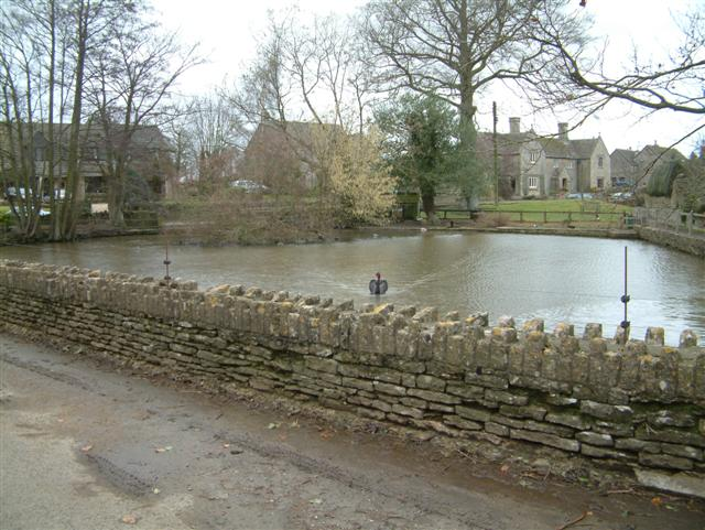 Alderton Duck Pond, with Black Swan