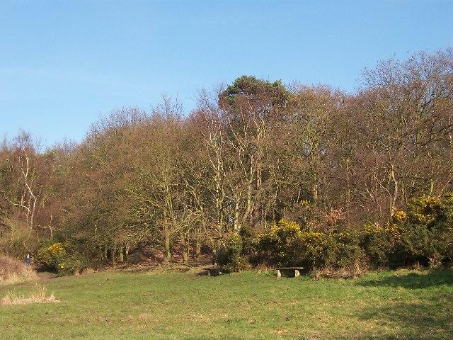 Storeton Hill