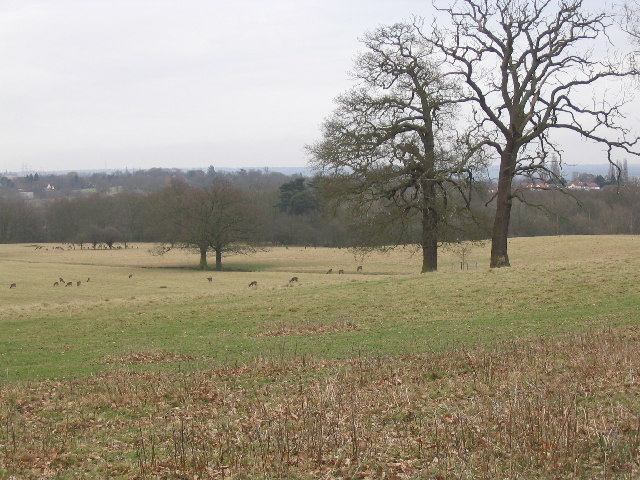 Deer Sanctuary near Theydon Bois