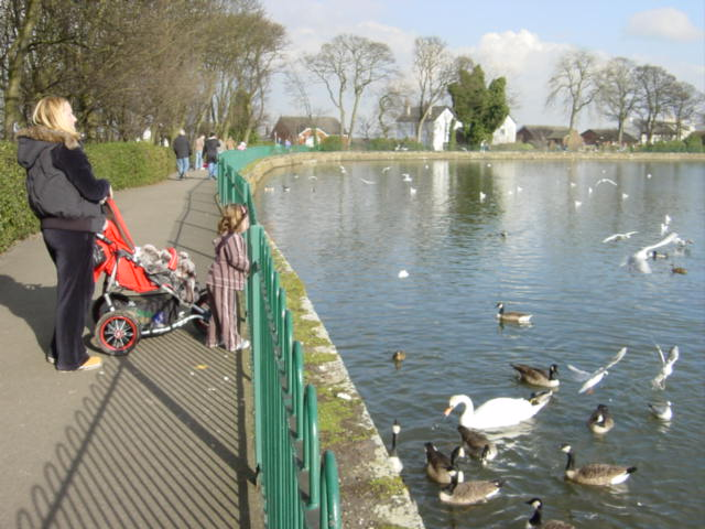Feeding the ducks at Taylor Park