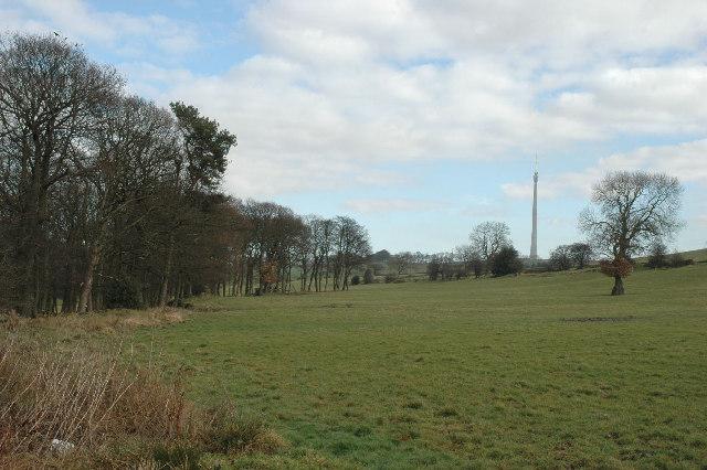 Radcliffe Wood, near Shelley