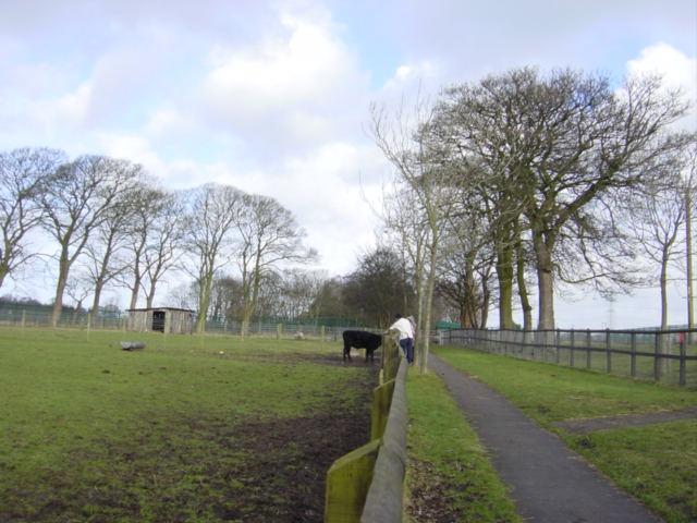 Acorn Venture Urban Farm, Kirkby