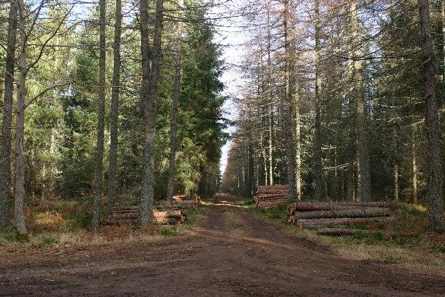 Forest entrance Darnaway Forest