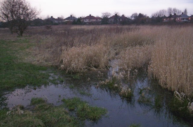 Source of the Alt, wetlands at Huyton