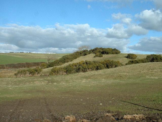 Gorse & Farmland near Endmoor