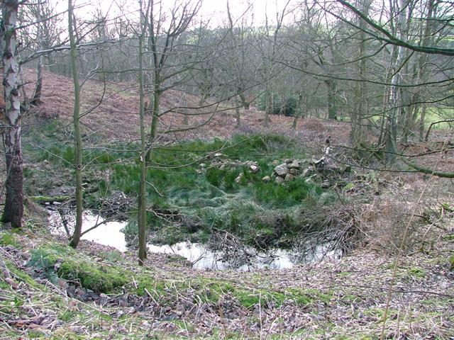 Marshy Area, Sigston Wood