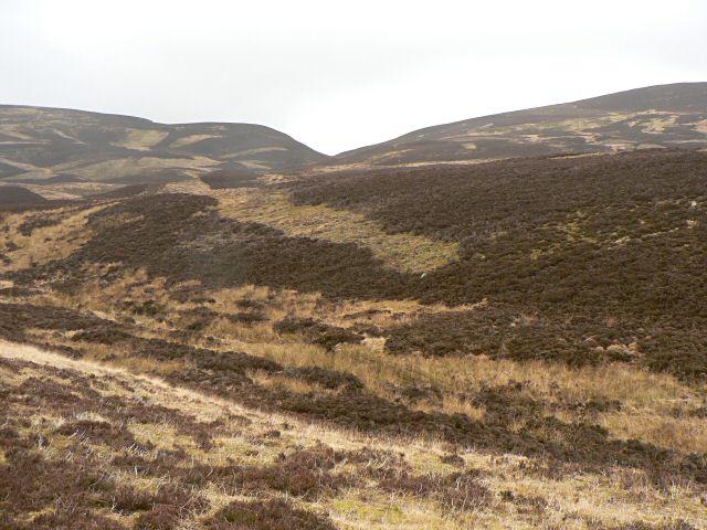 Moorland hillside